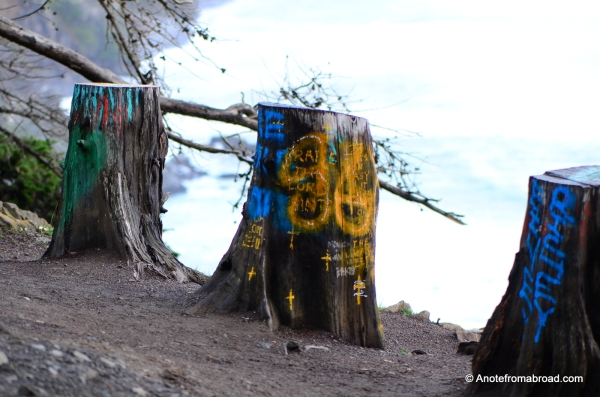 Cut down trees become a canvas for graffitti