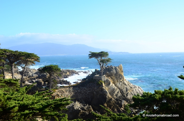 Lone Cypress - 17 mile drive - Pebble Beach