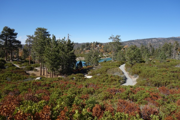 Children's Forest Walking Trail