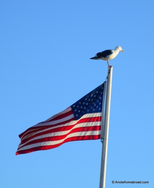 Seagull on flag pole