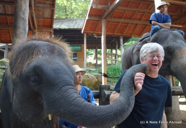 Baby elephant giving Tim a kiss.