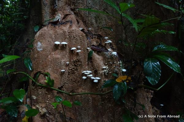Walking through the rain forest