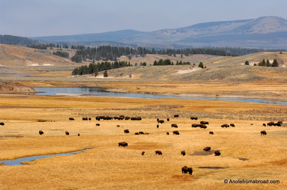 Yellowstone National Park (part 2) (6/6)
