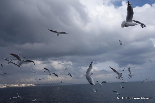 Seagulls followed the ferry