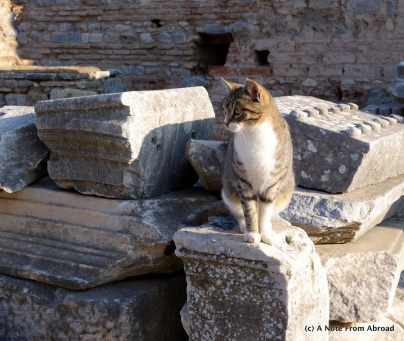 There were a lot of cats in Turkey
