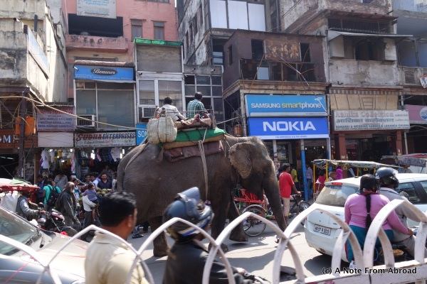 Elephant mixed in with the traffic