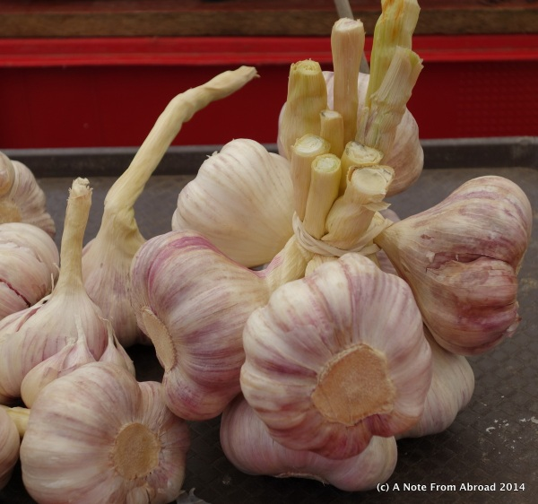 Huge garlic bulbs