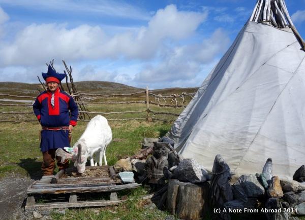 Sami with reindeer
