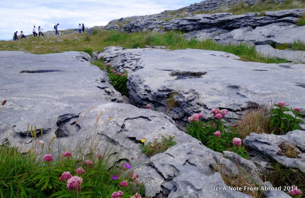 Delicate flowers grow amongst the rocks