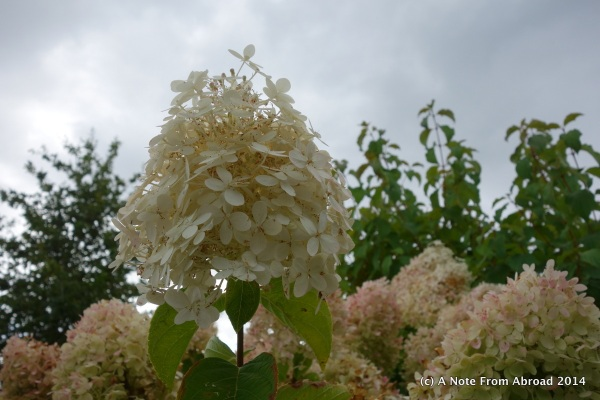 Flowers of Bayeux