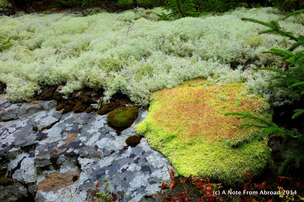 A variety of moss and lichen