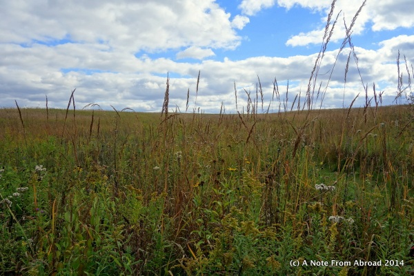 Tall grass prairie land