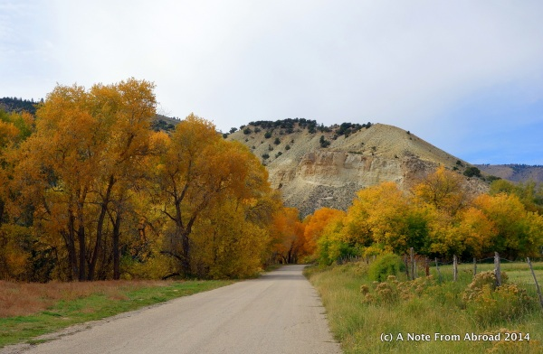 Tree shaded dirt roads