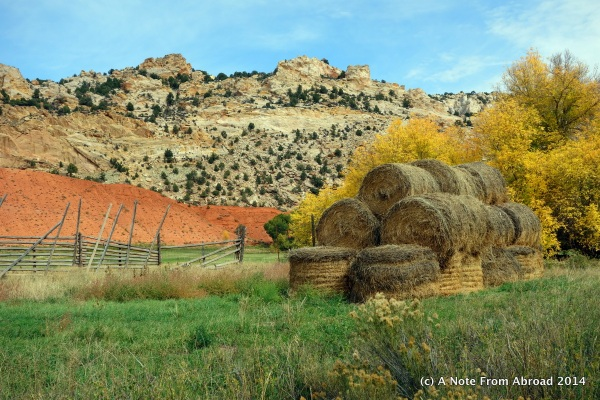 Rolls of hay in preparation for winter