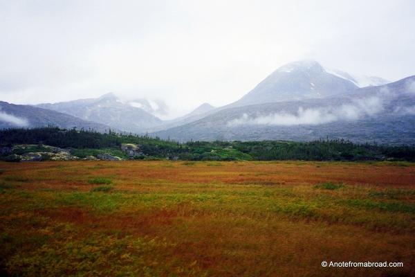 A meadow in Alaska