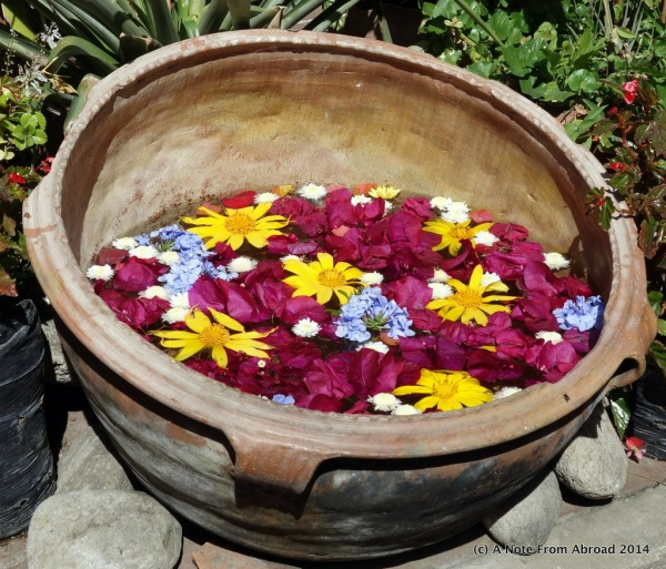 Pot of flowers
