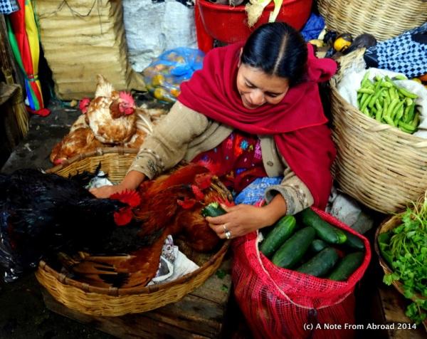 Lovingly feeding her chickens a cucumber