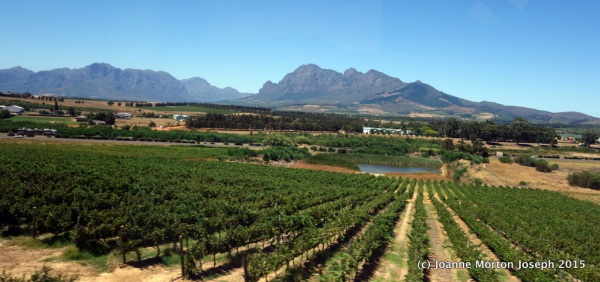 Fertile, hilly land with an ideal climate for growing wine grapes