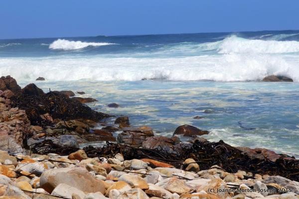 Black seaweed, crashing waves