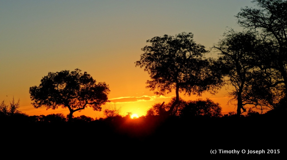 Kruger National Park, Part 3 - They crawl or fly plus sunset tour (1/6)