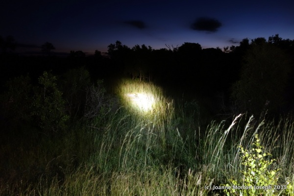 What it looks like on a night time game drive