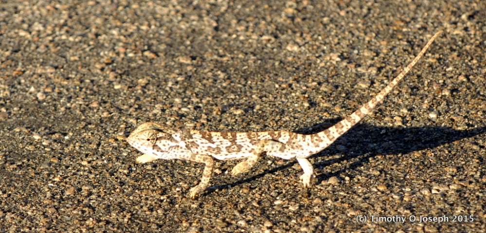 Kruger National Park, Part 3 - They crawl or fly plus sunset tour (2/6)