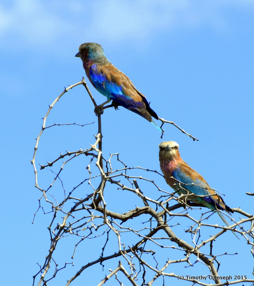 Kruger National Park, Part 3 - They crawl or fly plus sunset tour (6/6)