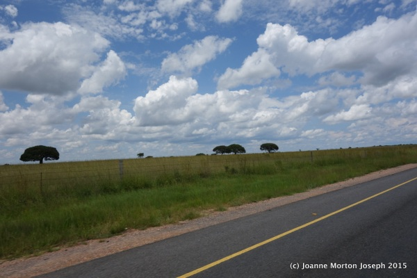 Along the drive toward Antelope Park - open grasslands, sparse trees, typical landscape in this area