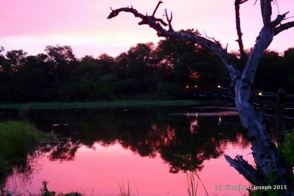 Sunset at Antelope Park