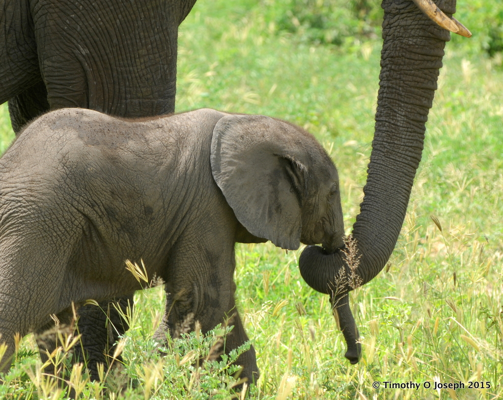 Botswana ~ Chobe National Park | A Note From Abroad