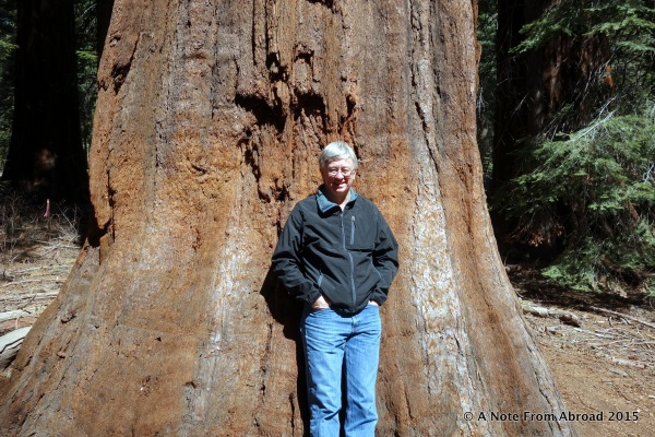 Tim is dwarfed by the size of the tree trunk