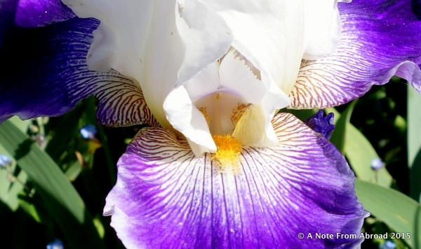 Yes, I do love Iris