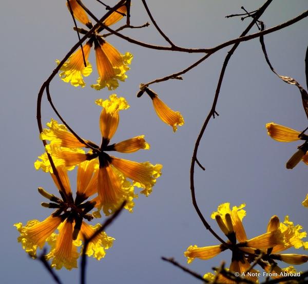 Taken at Fullerton Arboretum