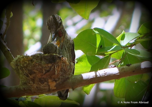 Momma bird feeding her chicks.