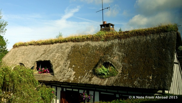Thatched roof with iris and hen and chicks on top