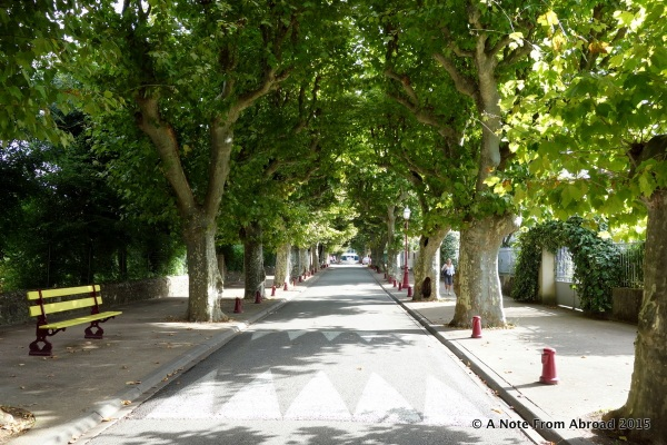 Sycamore lined street