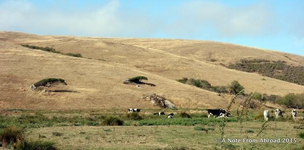 Parched hillsides