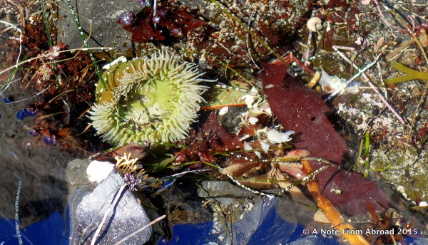Searching the tidal pools at low tide