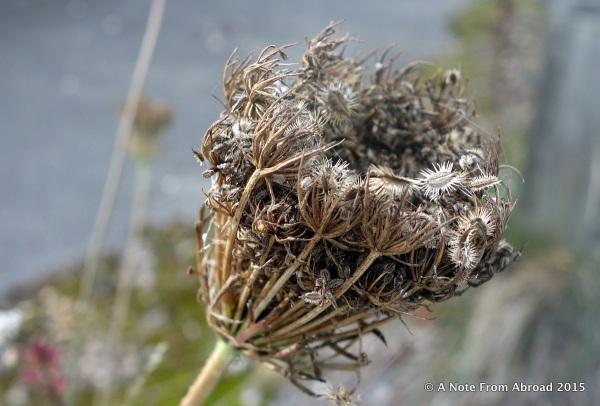 Weed seed pod
