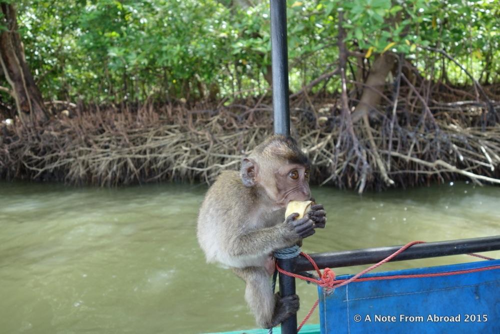 Monkey Business (6/6)
