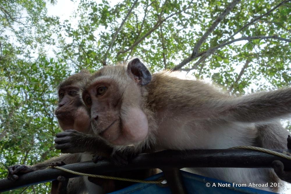 Monkey Business (4/6)