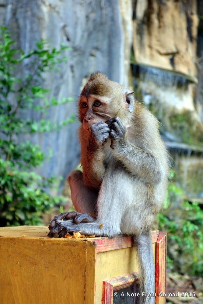 Monkey Business (3/6)