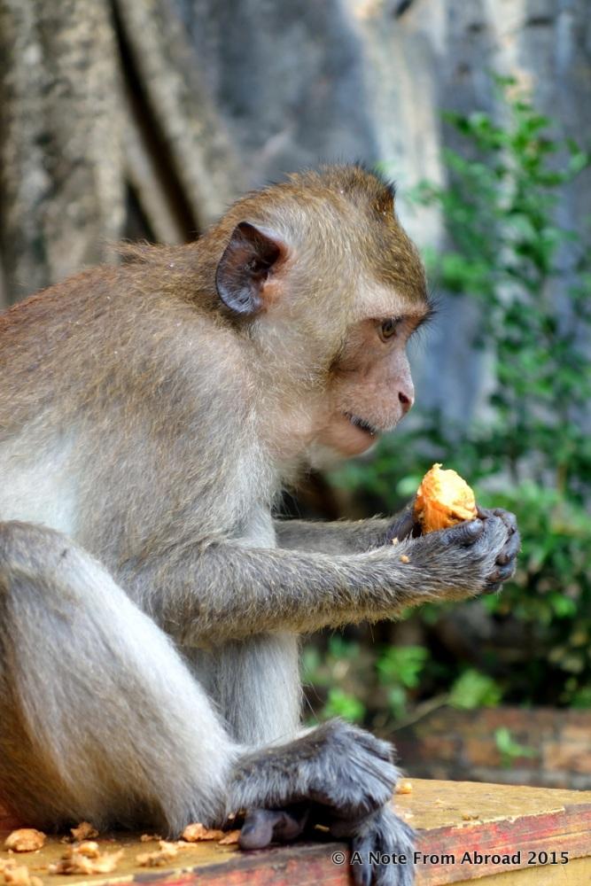 Monkey Business (2/6)