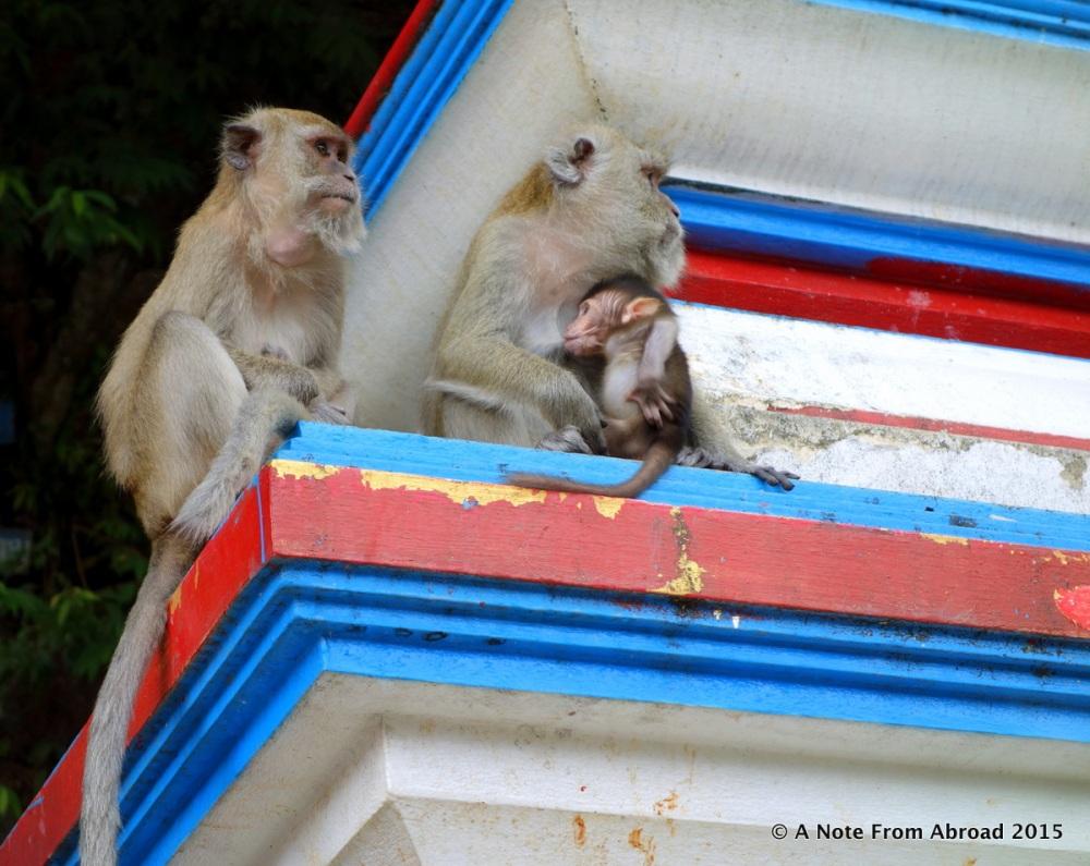Monkey Business (1/6)