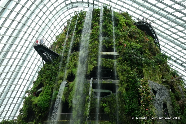 Inside the cloud Forest