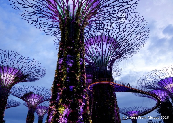 The Supertrees at Gardens of the Bay
