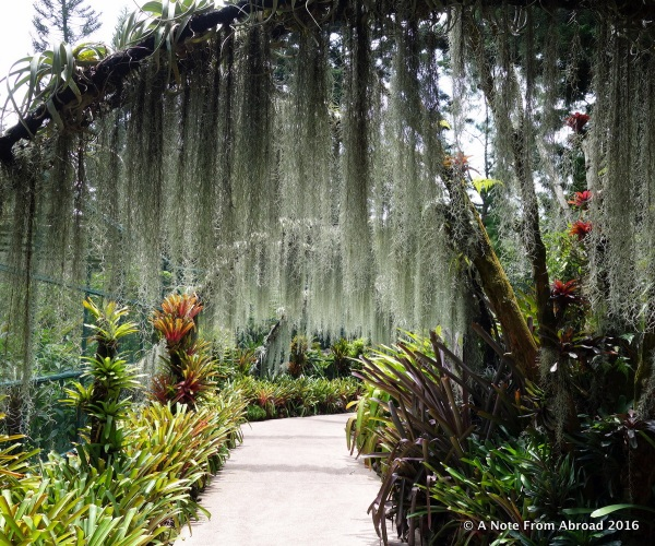 Moss walkway