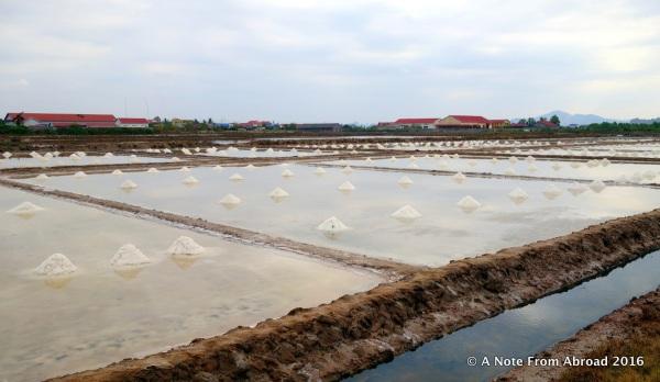Piles of salt drying in the sun