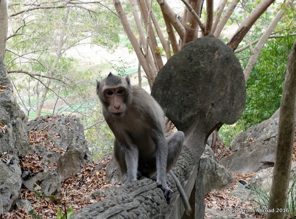 This was one mean and aggressive monkey!