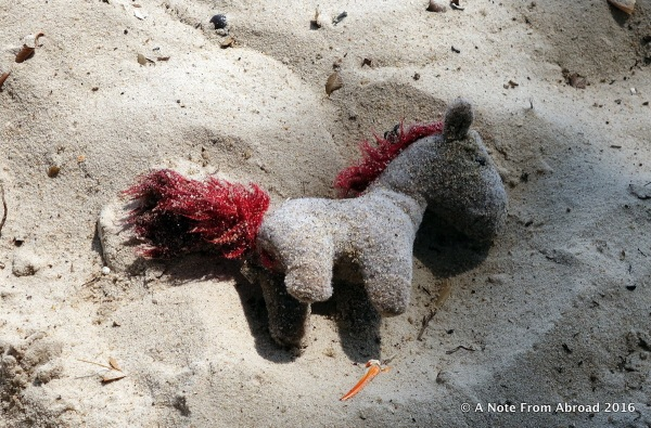 "Tim found a ""sea horse"" at waters edge, covered in sand."